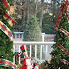 Outdoor Christmas Trees - Ideas for Display and Decor